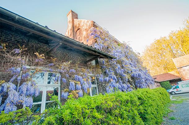 The wisteria covered farm store.