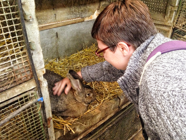 Alison chats with her countryman - a Belgian Giant rabbit