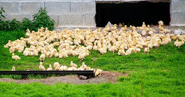Day 15 – Farm Stay – La Fraiserie, Saint-Martin Le Hebert, Normandy