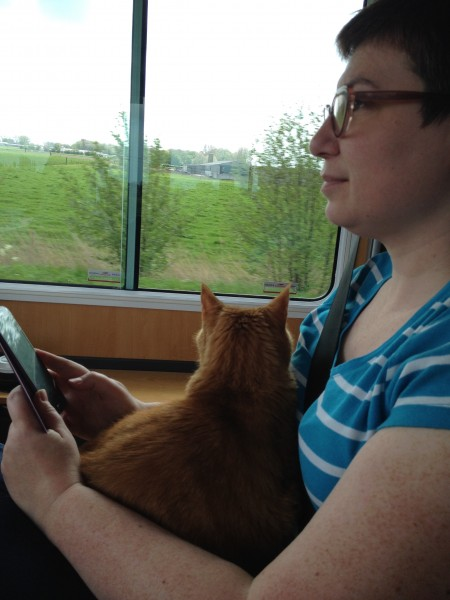 Orange cat heading back to Belgium