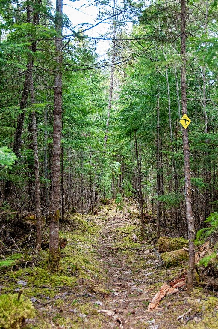 Hiking the Portage Trail at Mt. Carleton Provincial Park