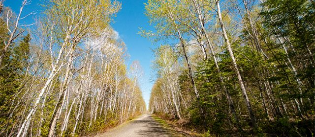 Hiking the Terry Fox Trail at Sugarloaf Provincial Park